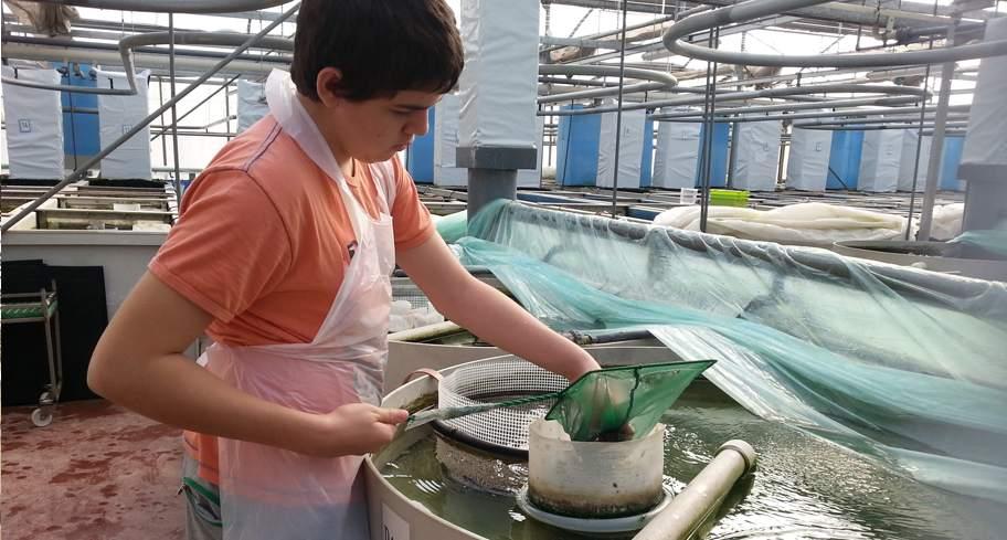 דגי נוי טרופיים מהמדבר – לייצוא ולמכירה בארץ